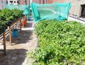 3 محاور لترشيد استهلاك المياه.. التسوية بالليزر وزراعة المصاطب وأصناف مبكرة