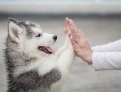 كلب يخبر صاحبته بإصابتها بمرض السرطان.. اعرف القصة
