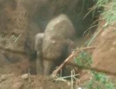 شاهد.. أنثى فيل غاضبة تهاجم قرويين بعد سقوط صغيرها فى حفرة موحلة