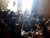اكتشاف 300 قطة فى شقة من غرفتين.. اعرف تفاصيل إنقاذها