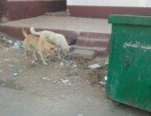 """""""سكان البساتين"""" يشتكون من انتشار الكلاب المسعورة بالمنطقة"""