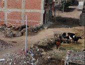 تحويل قطعة أرض لحظيرة ماشية بقرية قولنجيل فى المنصورة يزعج الأهالى