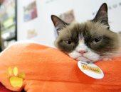 """بعد رحيل القط المليونير """"ميمى"""".. أغنى 10 حيوانات فى العالم"""