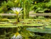 قبل ما تسيبها تدبل.. كيف تعمل النباتات من أجل كوكب الأرض؟