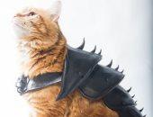 لو خايف عليه احميه.. رجل يصمم درعا ثلاثي الأبعاد لحماية القطط.. فيديو