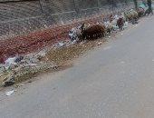 تراكم القمامة ومخلفات البناء ورعاية الغنم.. مشاكل شارع عمرو ابن أبى ربيعة بالهرم