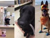 8 وظائف للبشر نجح فيها الكلاب.. أبرزها ريسيبشن فى عيادة ومنقذ على الشاطئ