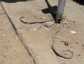 كابلات كهرباء تهدد حياة أهالى شارع محمد كامل بالدقى وتنذر بوقوع كارثة