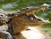 حيوانات بدرجة مجرمين..تمساح وديك وببغاء يساعدون أصحابهم في إرتكاب جرائم