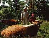 الماشية تتجاوز عدد السكان.. البرازيل أكبر دولة فى عدد رؤوس الماشية