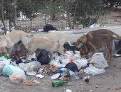صور.. اضبط مخالفة.. الكلاب الضالة والمسعورة تثير ذعر سكان بورفؤاد