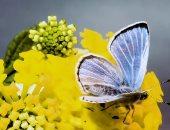 القارئة مروى خيرالله تكتب: الفراشات المُلونة 
