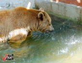 المثلجات واللبن.. إجراءات حماية حيوانات حديقة الجيزة من الموجة الحارة (صور)