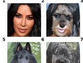 الذكاء الاصطناعى يغير صور كلبك إلى حيوان آخر .. اعرف هيحول البشر لإيه