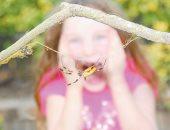 """""""الأنتوموفوبيا""""..فوبيا الخوف من الحشرات اعرف أعراضها"""