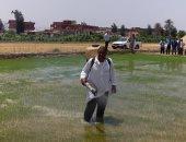الرى: نجاح الإجراءت التنسيقية مع الزراعة لحصر مخالفات الأرز.. اعرف التفاصيل