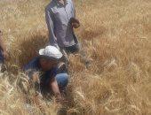 محافظ سوهاج: توريد 119 ألفا و500 طن من محصول القمح إلى الشون والصوامع