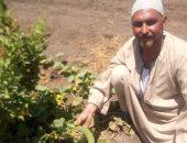 صور .. مزارع بالمنوفية يطبق أسلوب الرى الحديث فى مزرعة 50 فدانا