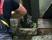 فى الآخر رجعت لوحدها.. عملية إنقاذ قطة تتكلف 5 آلاف إسترلينى.. صور