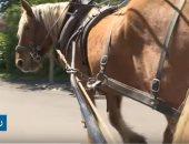 فيديو.. قرية فرنسية تعتمد الخيول للنقل المدرسى والزراعة.. اعرف السبب