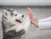 ديلى ميل: أصحاب الكلاب أكثر نشاطا من غيرهم