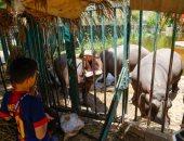 حديقة حيوان الجيزة تستقبل 40 ألف زائر فى أول أيام عيد الأضحى