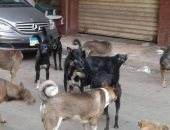 الكلاب الضالة تسبب الفزع والإزعاج لسكان شارع مسرة بروض الفرج