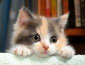 للاهتمام بالقطط الصغيرة أصول.. اعرف أهمها