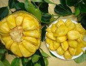 9 معلومات لا تعرفها عن الكاكايا أكبر فاكهة فى العالم