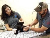 """فيديو وصور.. ولادة نمر أسود نادر فى حديقة حيوان """"كولياكان"""" بالمكسيك"""