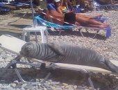 كلب البحر بيتشمس وطابور من الراكون.. أغرب المشاهد على الشواطئ.. صور