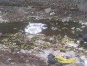 شكوى من انتشار القمامة بشارع صابر باشا صبرى بالهرم وغرقه بمياه الصرف الصحى
