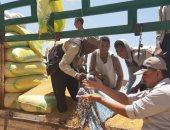 زراعة أسيوط: توريد 145 ألف طن قمح بالصوامع والشون منذ بدء موسم الحصاد