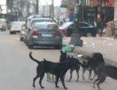 انتشار الكلاب الضالة يهدد الأطفال بشارع أحمد إبراهيم ببولاق الدكرور
