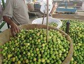 أسعار الخضروات والفاكهة بسوق العبور.. انخفاض الليمون لـ4 جنيهات والبصل بـ2.5 جنيه