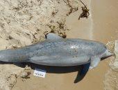 مئات الدلافين جرفتها الأمواج على طول ساحل الخليج.. والسبب غير معروف
