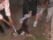 بيطري الغربية:حملات مكثفة للقضاء على الكلاب الضالة