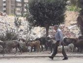 شكوى من تربية الأغنام فى شارع مصطفى النحاس بمدينة نصر