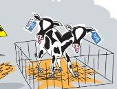 """صحيفة إسرائيلية تشبه حزب الليكود و""""الأزرق- الأبيض"""" ببقرتين وليبرمان حارسهما"""