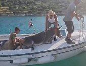 إنقاذ حياة حمار تائه فى جزيرة بكرواتيا.. اعرف القصة