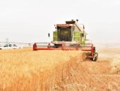 الزراعة: تعلن ارتفاع مساحات القمح لـ 3 ملايين  فدان وجارى الحصر