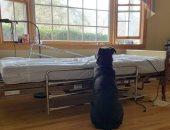 """كلب يجلس بجانب سرير صاحبه المتوفى عدة أيام أملا فى عودته.. اعرف قصة """"موس"""""""