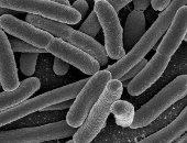 """علماء يبتكرون """" أنف إلكترونى"""" لتقليل وصف المضادات الحيوية"""