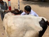 الزراعة تعلن انطلاق حملة تحصين المواشى ضد الحمى القلاعية والوادى المتصدع