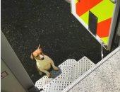 """""""راح بلغ الشرطة"""".. كلب ينقذ صديقة بعد سقوطه فى حفرة ليلاً"""