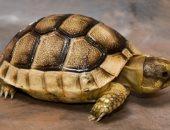 لو ليك فى تربية السلاحف.. 5 معلومات لازم تعرفها عنهم