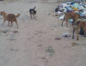 شكوى من انتشار الكلاب الضالة بمنطقة العجمى الإسكندرية
