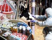 """نصائح """"الزراعة"""" لتغذية الماشية والدواجن ونقل الطيور خلال الموجة الحارة"""
