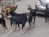 انتشار الكلاب الضالة يزعج أهالى شارع أحمد رجب فى المريوطية فيصل