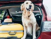 لو أول مرة هتسافر وكلبك معاك.. نصائح لقيادة آمنة